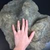 Cast of Eubrontes fossil (3-toe'd dinosaur footprint) with (living) human hand resting upon it.