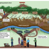 Chart diagram the pathways and obstacles students have to navigate to complete graduate school, including mountains, rivers, and forests.